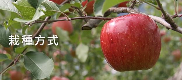 青森蘋果的栽種方式